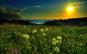 amanecer bello