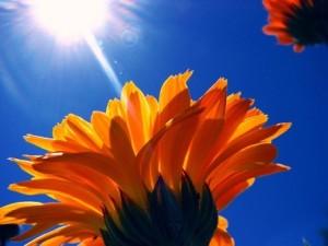 el sol en la flor
