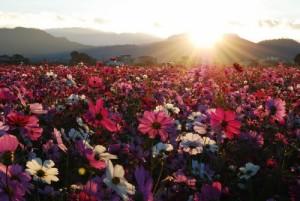 flores al amenecer