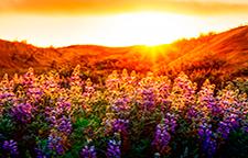 flores amaneciendo