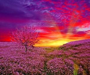 campo floreado