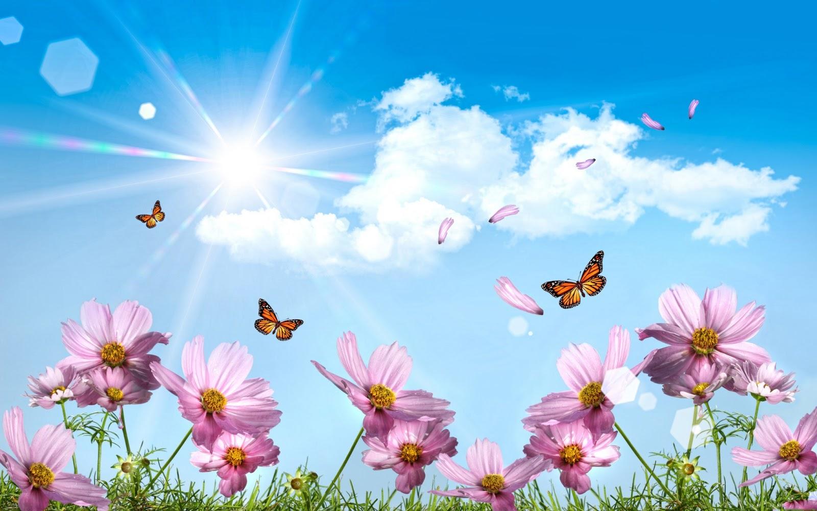 flores y sol