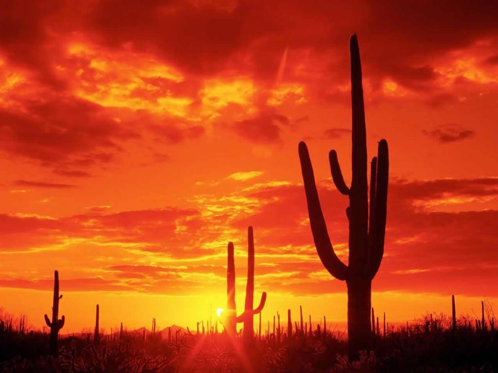 atardecer rojo en desierto