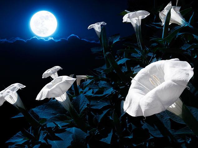 flores-en-la-noche